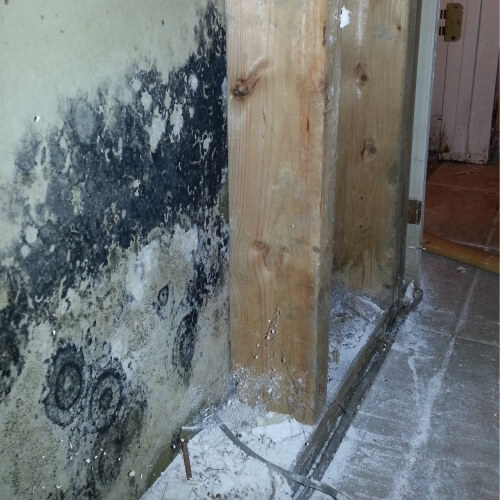 Mold On Walls - Mold Remediation - Deale, Maryland
